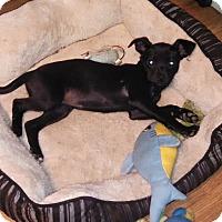 Adopt A Pet :: Mitzy - temecula, CA