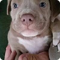 Adopt A Pet :: Penguin - Gainesville, FL