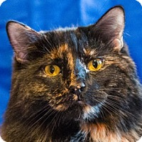 Adopt A Pet :: Dominique - Calgary, AB