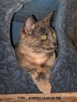Domestic Shorthair Cat for adoption in Brainardsville, New York - Tori