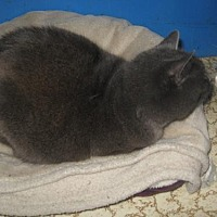 Adopt A Pet :: Stonewall - Coos Bay, OR