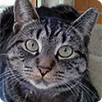 Adopt A Pet :: Max - Durham, NC