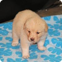Adopt A Pet :: Merry - Huntsville, AL