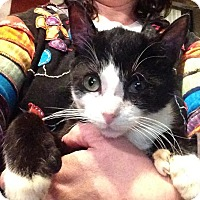 Adopt A Pet :: Quinn -XTRA TOES! - East Brunswick, NJ