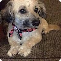 Adopt A Pet :: KRISSY - Mission Viejo, CA