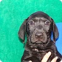 Adopt A Pet :: Bender - Oviedo, FL