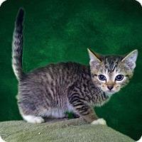 Adopt A Pet :: Duke Weaselton - New Castle, PA