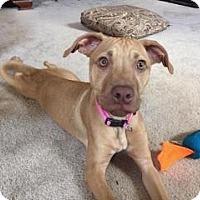 Adopt A Pet :: Nya - Dayton, OH