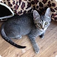 Adopt A Pet :: Abby - Orange, CA