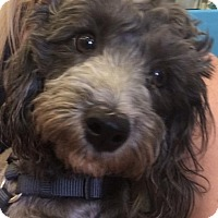 Adopt A Pet :: Mr. Higgins - Las Vegas, NV