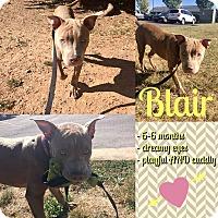 Adopt A Pet :: Blair - Colmar, PA