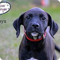 Adopt A Pet :: Karsyn - Lee's Summit, MO