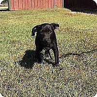 Adopt A Pet :: Bitsey - Windham, NH