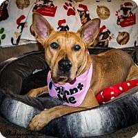 Adopt A Pet :: Precious - Englewood, CO
