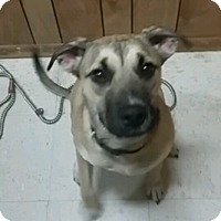 Adopt A Pet :: Lacey - Brookhaven, NY