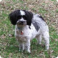 Adopt A Pet :: Sprocket - Nashville, TN