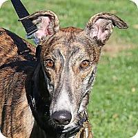 Adopt A Pet :: Glide - Santa Rosa, CA