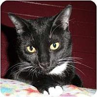 Adopt A Pet :: Avery - Phoenix, AZ