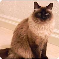 Adopt A Pet :: Atticus - Bonita Springs, FL