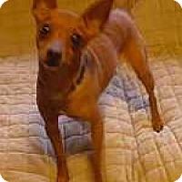 Adopt A Pet :: Rusty - McDonough, GA