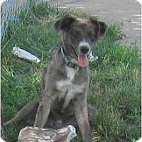 Adopt A Pet :: Charlie - Wahoo, NE