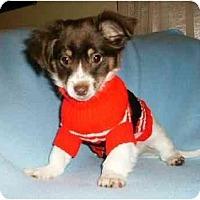 Adopt A Pet :: Patrick - Mooy, AL