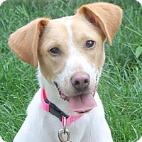 Adopt A Pet :: Annabelle - North Olmsted, OH