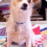 Adopt A Pet :: Miles - Homewood, AL
