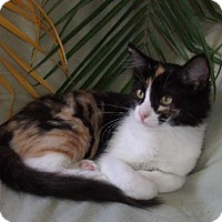 Adopt A Pet :: Courtney - Hermosa Beach, CA