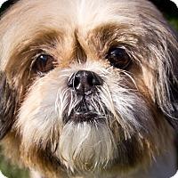 Adopt A Pet :: Zoe - Orange, CA