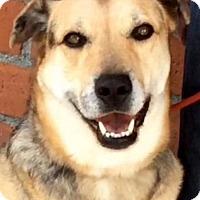 Adopt A Pet :: CAROLINA (video) - Los Angeles, CA