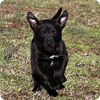 Adopt A Pet :: Kalie Sue~ meet me! - Glastonbury, CT