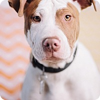 Adopt A Pet :: Millet - Portland, OR