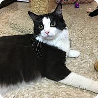 Adopt A Pet :: Maddox aka Oreo - Houston, TX