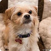 Adopt A Pet :: Charlie - Bristol, CT