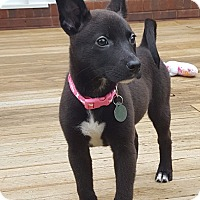 Adopt A Pet :: Ember - Knoxville, TN
