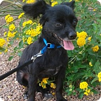 Adopt A Pet :: Jax formerly Temo - Las Vegas, NV