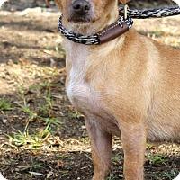 Adopt A Pet :: Rwanda - San Diego, CA
