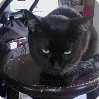 Adopt A Pet :: Bella - Alhambra, CA