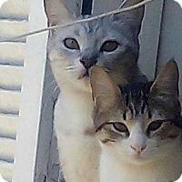 Adopt A Pet :: Loza and Habob - Marion, CT