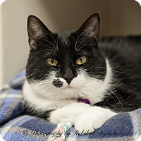 Adopt A Pet :: Beazy - Byron Center, MI