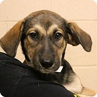 Adopt A Pet :: Mrs. Bossy Pants~meet me~ - Glastonbury, CT