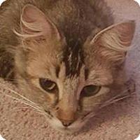Adopt A Pet :: Kayla - Temecula, CA