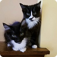 Adopt A Pet :: LuLu & Zoey - Cleveland, OH