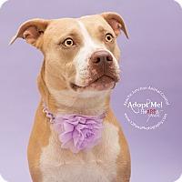 Adopt A Pet :: Peanut - Apache Junction, AZ