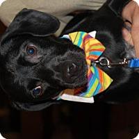 Adopt A Pet :: Jaxx - Wedgefield, SC