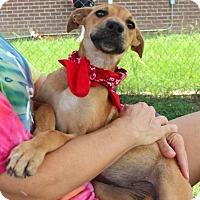 Adopt A Pet :: Mona - Groton, MA