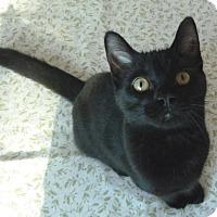 Adopt A Pet :: Michael - Toronto, ON