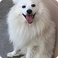 Adopt A Pet :: Kuma - The Dalles, OR
