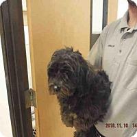 Adopt A Pet :: MIA - Oroville, CA